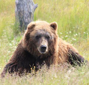 Bear Market?